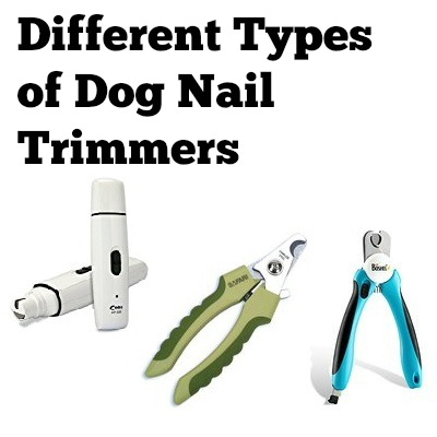 dog nail clippers different types